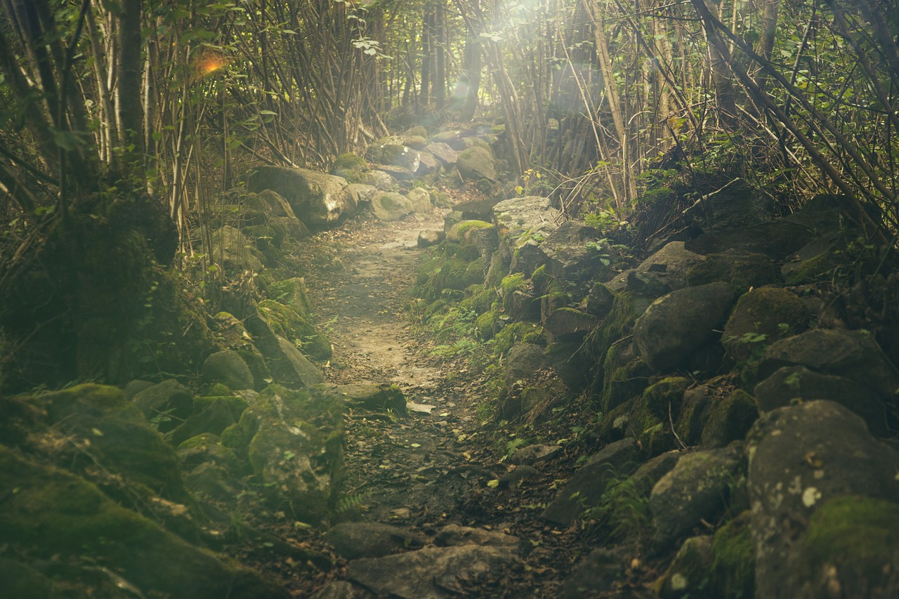 forest-438432_1280