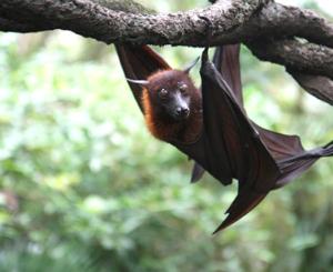 Há Morcegos na Serra